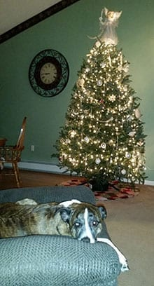 Christmas Season - Dakota and her tree